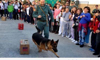 AionSur 10426272_1404880933149920_1857665153711805304_n-400x240 La Guardia Civil organiza el día 24 de marzo en El Ruedo una jornada con exhibiciones de sus cuerpos especiales Educación