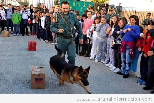 AionSur 10426272_1404880933149920_1857665153711805304_n La Guardia Civil organiza el día 24 de marzo en El Ruedo una jornada con exhibiciones de sus cuerpos especiales Educación