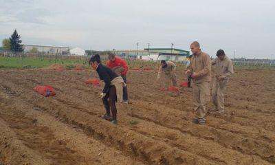AionSur 20150319_102111-400x240 Curso especializado en el cultivo del espárrago verde organizado por la Sociedad de Desarrollo Empresas Formación y Empleo  Sociedad de Desarrollo Desde Arahal Curso espárrago verde