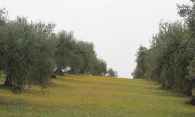 AionSur 16541843733_89081538a8_b-400x240 La excelencia del aceite ecológico Xtra Ecolivum comienza a abrirse paso en el Pago Las Magallanas y Cerro Ovejero Medio Ambiente Xtra Ecolivum