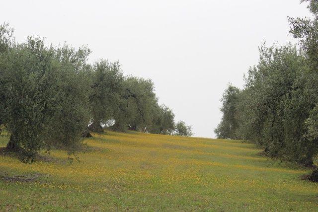 AionSur 16541843733_89081538a8_b La excelencia del aceite ecológico Xtra Ecolivum comienza a abrirse paso en el Pago Las Magallanas y Cerro Ovejero Medio Ambiente Xtra Ecolivum