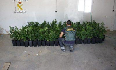 AionSur FOTO-MARIHUANA-2-400x240 La Guardia Civil detiene a dos vecinos de Camas con 514 plantas de marihuana Sucesos