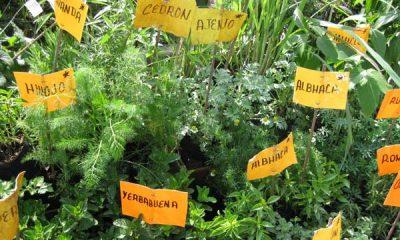 AionSur hierbas-aromaticas-400x240 Curso sobre las plantas aromáticas y medicinales, en el Centro CAFA Empresas Formación y Empleo  Plantas aromáticas