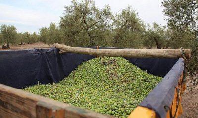 AionSur 21406927702_90fbda9d20_z-400x240 Organizaciones de agricultores trasladan a la Subdelegación del Gobierno su preocupación por los robos de aceitunas Sin categoría