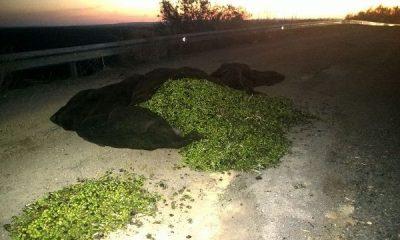 AionSur PEQUE-400x240 Intervienen 602 kilos de aceitunas hurtadas por dos jóvenes en un pago de Arahal Sucesos