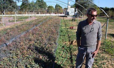 AionSur 22772595574_d8456df01e_b-400x240 20.000 pistacheras para revolucionar la agricultura de la comarca Empresas Paradas Provincia Sin categoría