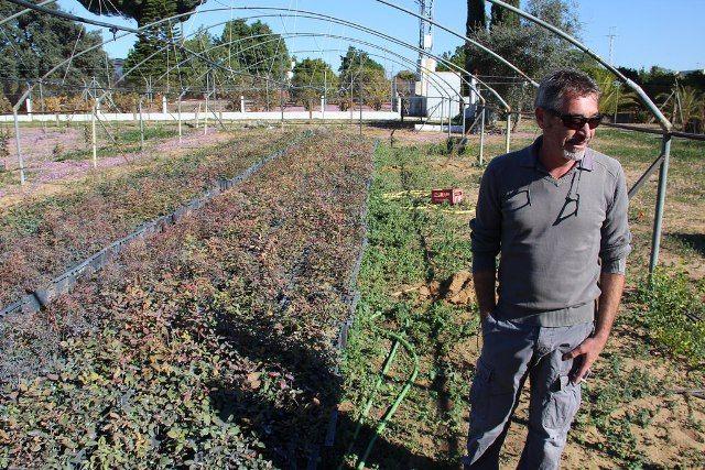 AionSur: Noticias de Sevilla, sus Comarcas y Andalucía 22772595574_d8456df01e_b 20.000 pistacheras para revolucionar la agricultura de la comarca Empresas Paradas Provincia Sin categoría