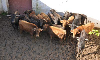 AionSur: Noticias de Sevilla, sus Comarcas y Andalucía DSC_0007-400x240 Utrera: Curso de Bienestar Animal en Explotaciones Ganaderas en febrero Formación y Empleo Provincia Utrera