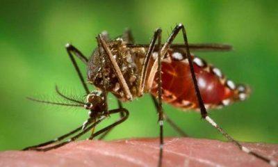 AionSur FOREIGN201506121008000282661375383-400x240 El virus Zika, la enfermedad que provoca, síntomas y tratamientos Análisis