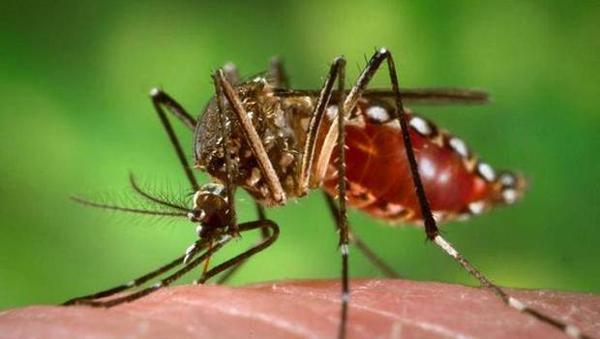 AionSur FOREIGN201506121008000282661375383 El virus Zika, la enfermedad que provoca, síntomas y tratamientos Análisis