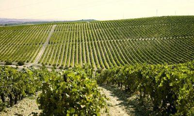 AionSur macharnudo_2-400x240 Agricultura publica el listado de adjudicatarios de nuevas plantaciones de viñedo para el año 2018 Medio Ambiente