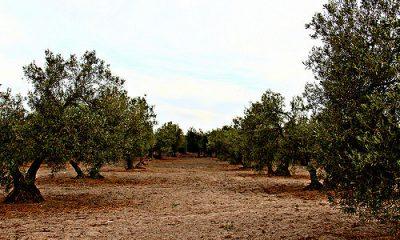 AionSur 21244556359_98ec3cc589_z-400x240 Las ayudas de la Junta permitirán la incorporación de 1.492 jóvenes a la actividad agrícola y ganadera Sin categoría