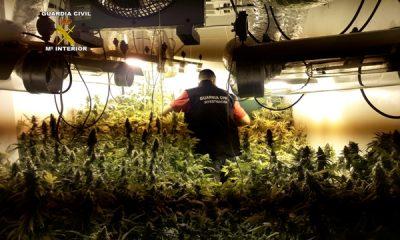 AionSur INVERNADERO-400x240 Detenido un vecino de Utrera por cultivar marihuana en un garaje comunitario Sin categoría