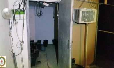 AionSur invernadero-paradas-400x240 Desmantelada una sala de cultivo de marihuana en Paradas Paradas Provincia