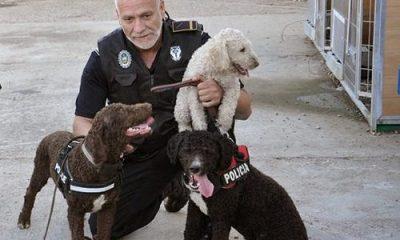 """AionSur 15283445228_3c910cb429-400x240 El Jefe de la Policía Local de Arahal denuncia que el Ayuntamiento lleva """"una absoluta y nefasta política de Seguridad Ciudadana"""" Sin categoría"""