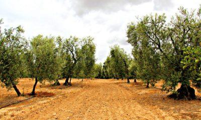 AionSur 21336957590_3a7d732ddc_o-1-400x240 El nuevo decreto-ley del gobierno autonómico pone fin a una traba histórica para el campo andaluz Sin categoría