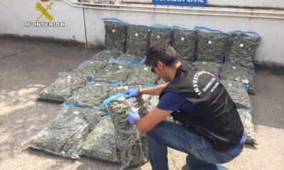 AionSur MARIHUANA-400x240 La Guardia Civil desmantela un punto de venta de marihuana manufacturada al por mayor Los Palacios Provincia Sucesos