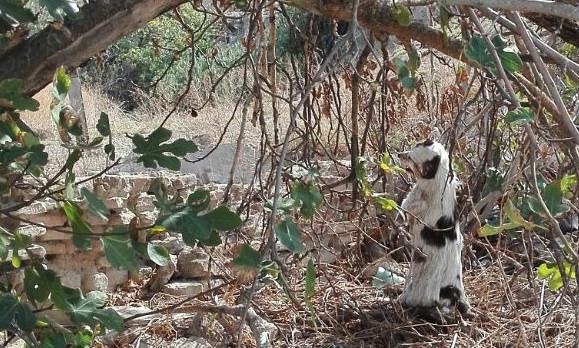 AionSur 30049574763_0cd4ef32ea_z Se investiga a dos personas por el ahorcamiento de un perro en Marchena, una de ellas la dueña Sucesos  ahorcamiento perro Marchena