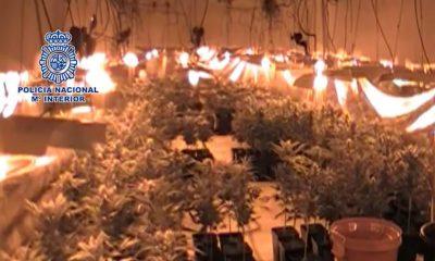 AionSur marihuana-moron-400x240 Desarticulada en Morón una organización criminal que poseía una plantación indoor de marihuana con más de 3000 plantas Morón de la Frontera Provincia