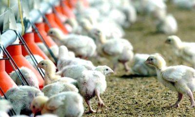 """AionSur: Noticias de Sevilla, sus Comarcas y Andalucía gripeaviar-400x240 Aviso de medidas preventivas ante """"el alto riesgo epidemiológico"""" por la gripe aviar Medio Ambiente"""