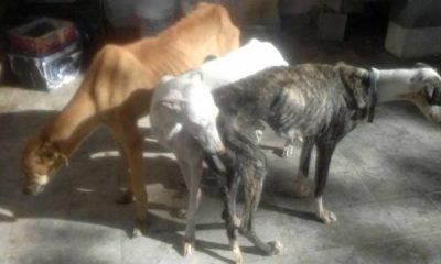 AionSur 15940716_1199286460140496_2866517584844613884_n-400x240 Asociaciones de defensa de animales de la comarca intensifican las denuncias públicas contra el abandono de perro de caza Asociaciones