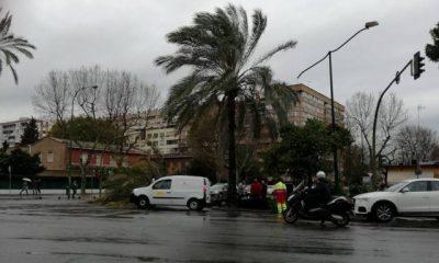 AionSur: Noticias de Sevilla, sus Comarcas y Andalucía 17103251_10208474015184282_4092121974757386222_n-400x240 Cortan el tráfico en Sevilla por la caída de una palmera debido al fuerte viento Sucesos