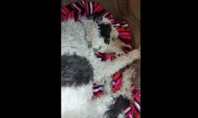AionSur 34266247442_04b6955b39-400x240 Una vecina de Arahal denuncia el envenenamiento de su perro Arahal Provincia Sin categoría