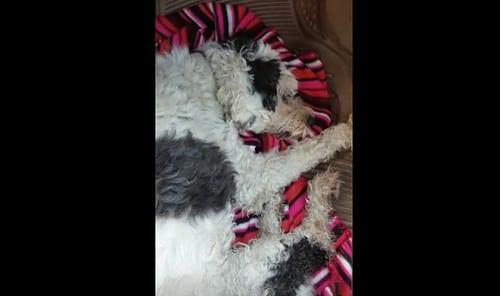 AionSur 34266247442_04b6955b39 Una vecina de Arahal denuncia el envenenamiento de su perro Arahal Provincia Sin categoría