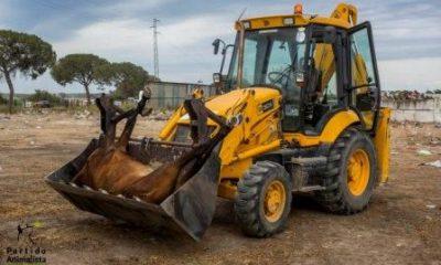 AionSur 35049474372_a44897249e-400x240 ¿Qué provoca la muerte de caballos en El Rocío? Andalucía Huelva
