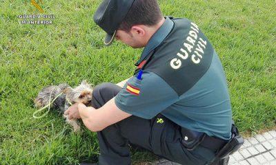 AionSur 35268858696_985006f247-400x240 La Guardia Civil impide que un hombre ahorque y ahogue a su perro Huelva Sucesos