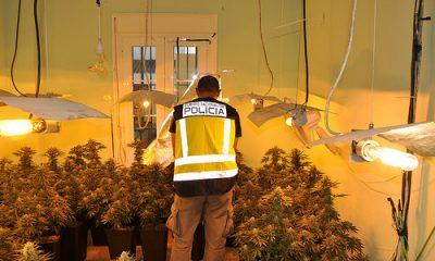AionSur 35369703706_679cb96a18-400x240 Desmantelado un cultivo indoor en una vivienda de Dos Hermanas Dos Hermanas Provincia