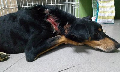AionSur 35477361351_e6d9a48425-1-400x240 Decapitan a una camada de perros recién nacidos y disparan contra otro en plena calle Andalucía Huelva