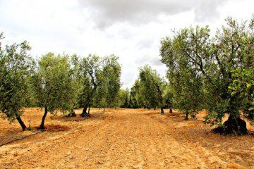 AionSur 21336957590_4ab40b71c4_b-360x240 La Junta incrementará en otros 31 millones de euros el respaldo económico a la producción ecológica Andalucía