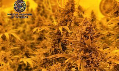 AionSur 35846673111_d640979a13-400x240 Desarticulada una plantación indoor de marihuana en una nave industrial de Alcalá de Guadaíra Alcalá de Guadaíra Provincia