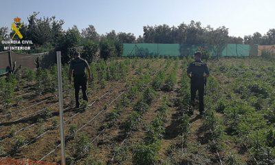 AionSur 35890569212_501470fef6-400x240 Desmanteladas 2 plantaciones de marihuana con más de 2500 unidades Dos Hermanas Provincia Utrera