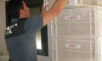 AionSur 36267990396_5b8eb330a9-400x240 Recuperada una parte de las cajas sustraídas en una panadería de Isla Cristina Andalucía Huelva