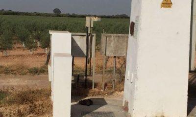 AionSur 534c9083-77d6-4352-be0a-72e39ae3b18a-400x240 Una cigüeña y dos águilas aparecen electrocutadas al pie de una torre de Endesa en La Puebla Medio Ambiente