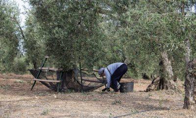 AionSur 30024201225_011f96b2ea_z-400x240 La campaña de verdeo, condicionada de nuevo por la escasez de lluvia Agricultura Medio Ambiente