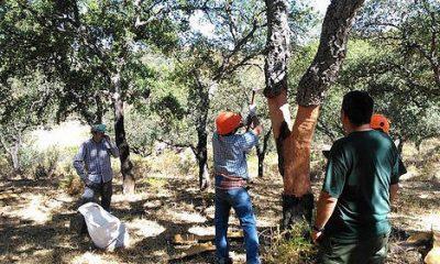 AionSur 36464569513_490f7fa9e6-400x240 El 20 % del corcho andaluz se queda sin recoger en el árbol Agricultura