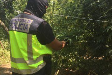 AionSur dos-hermanas4-360x240 Desmantelada una plantación de marihuana en Coria del Río Sucesos
