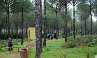 AionSur image_167207_jpeg_800x600_q85-400x240 La Junta organiza 51 talleres prácticos en espacios naturales dirigidos a mayores Medio Ambiente