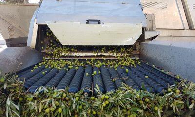 AionSur 20171023_171743-400x240 COAG Andalucía pide que se amplíe la autorización para regar un olivar muy perjudicado por la sequía Agricultura