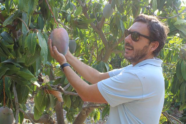 AionSur 37192722740_6e1692e876_z Málaga, el Mediterráneo y una finca con frutas exóticas única en Europa Málaga