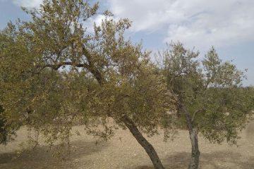 AionSur 740af7fd-ef5f-40d8-9aa3-304138750eb5-1-360x240 COAG pide financiación urgente para los profesionales afectados por la sequía Agricultura
