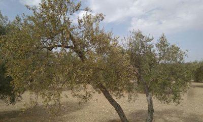 AionSur 740af7fd-ef5f-40d8-9aa3-304138750eb5-1-400x240 COAG pide financiación urgente para los profesionales afectados por la sequía Agricultura