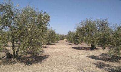 AionSur 75ba4fb0-16ca-486b-9333-fecba592adf0-400x240 La campaña de verdeo llega a su fin, apenas tres semanas después de su comienzo Agricultura