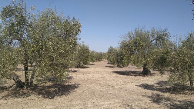 AionSur 75ba4fb0-16ca-486b-9333-fecba592adf0 La campaña de verdeo llega a su fin, apenas tres semanas después de su comienzo Agricultura