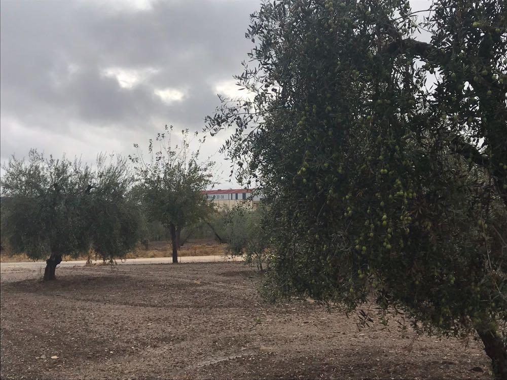 AionSur Olivar Las empresas turísticas del olivar apoyan su candidatura a Patrimonio de la Unesco Sin categoría