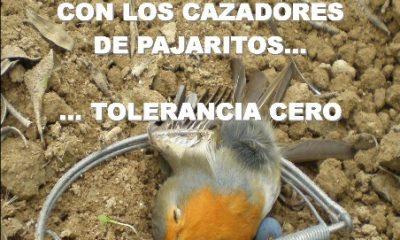 AionSur dos-400x240 Jaedilla inicia la campaña de protección de aves insectívoras en Arahal Medio Ambiente