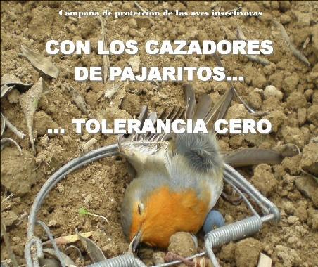 AionSur dos Jaedilla inicia la campaña de protección de aves insectívoras en Arahal Medio Ambiente